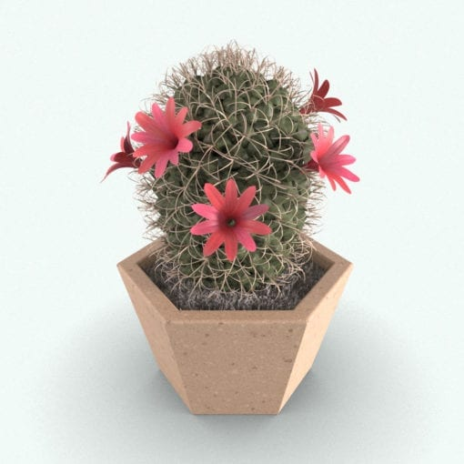 Revit Family / 3D Model - Powder Puff Cactus Plant Rendered in 3D Max with Vray