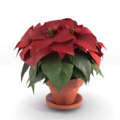 Revit Family / 3D Model - Poinsettia Rendered in 3D Max with Vray