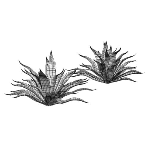 Revit Family / 3D Model - Agave 3D Max/FBX Wireframe