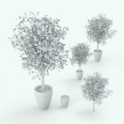 Revit Family / 3D Model - Ficus Variations