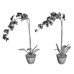 Revit Family / 3D Model - Orchid 3D Max/FBX Wireframe