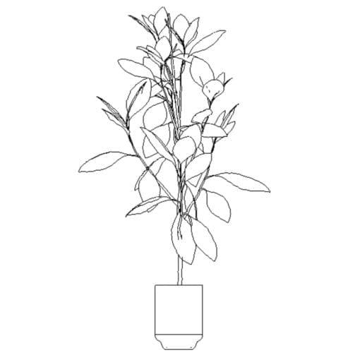 Revit Family / 3D Model - Ficus 2 - Revit and AutoCAD Front View