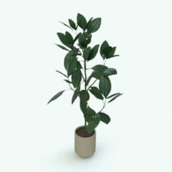 Revit Family / 3D Model - Ficus Plant 2 Rendered in Revit